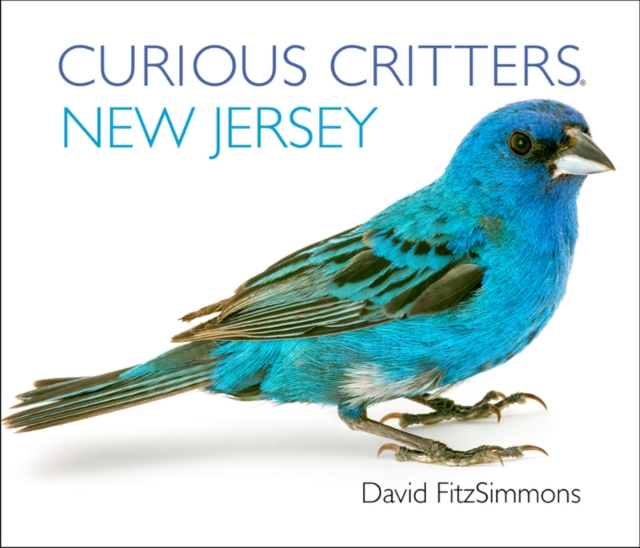 Curious Critters New Jersey