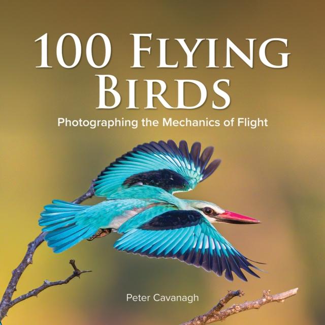 100 FLYING BIRDS