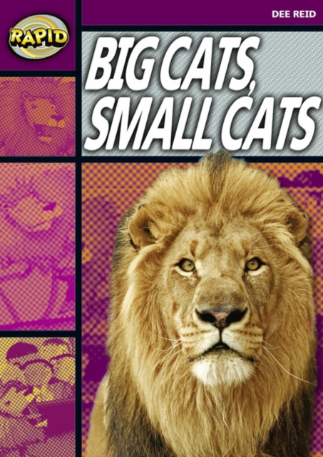 Rapid Reading: Big Cats Small Cats (Stage 1, Level 1A)
