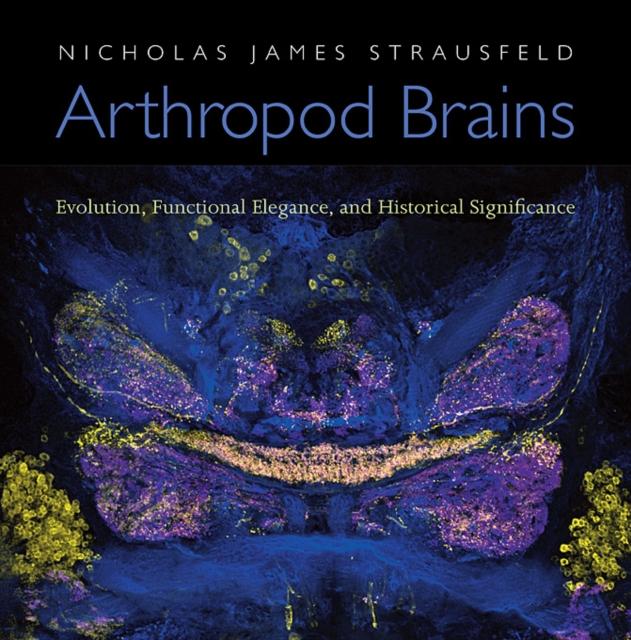 Arthropod Brains