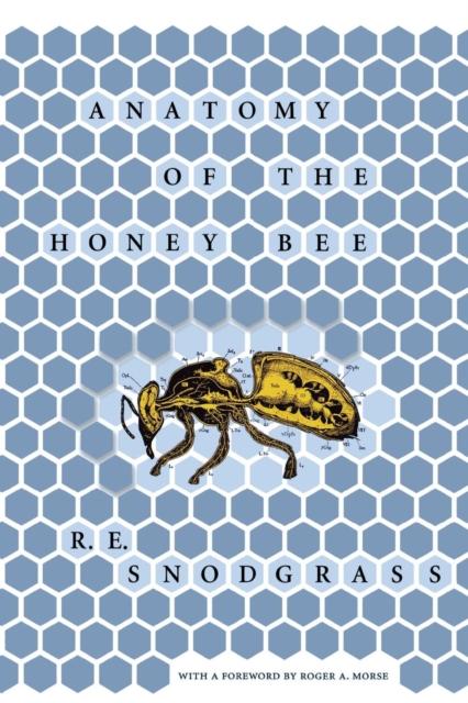 Anatomy of the Honey Bee