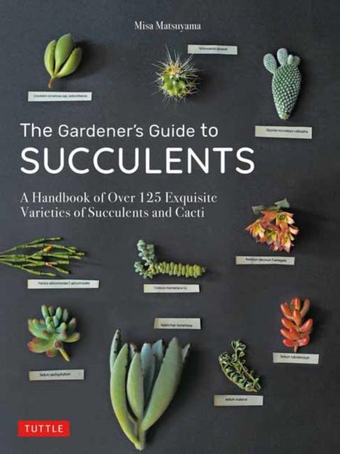 Gardener's Guide to Succulents