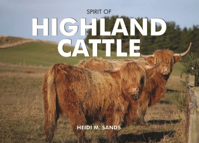 Spirit of Highland Cattle