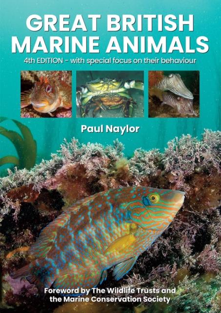 Great British Marine Animals