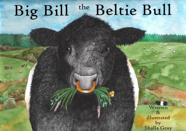 Big Bill the Beltie Bull