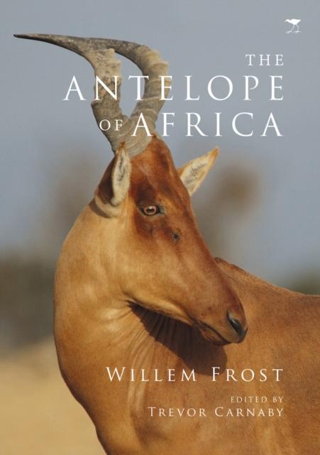 antelope of Africa