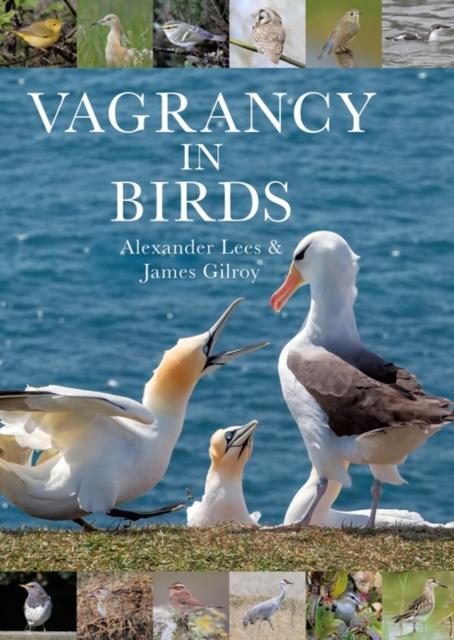 Vagrancy in Birds