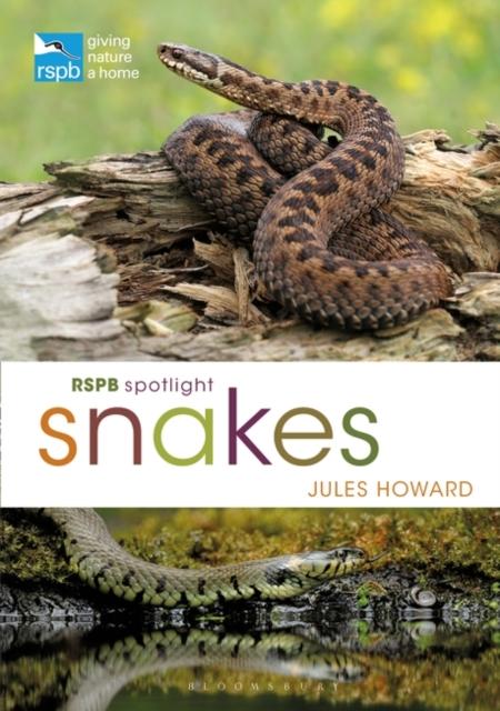 RSPB Spotlight Snakes