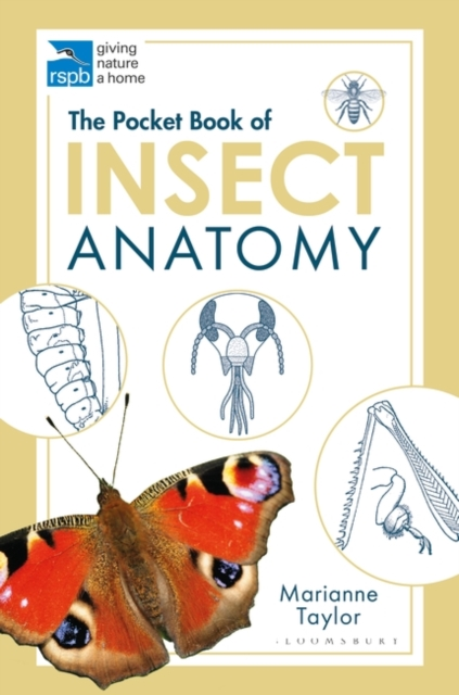 Pocket Book of Insect Anatomy