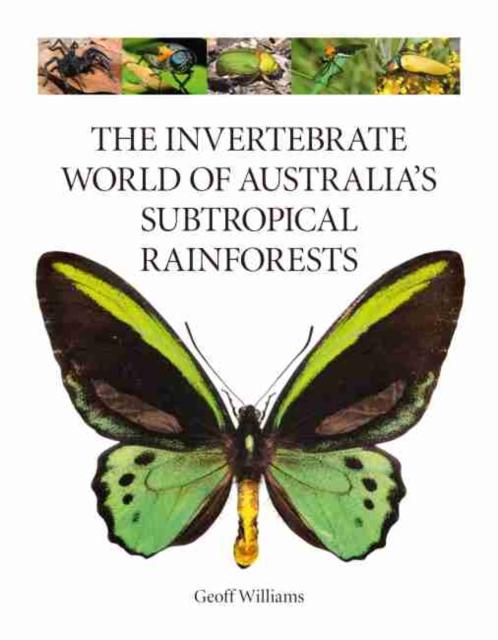 Invertebrate World of Australia's Subtropical Rainforests