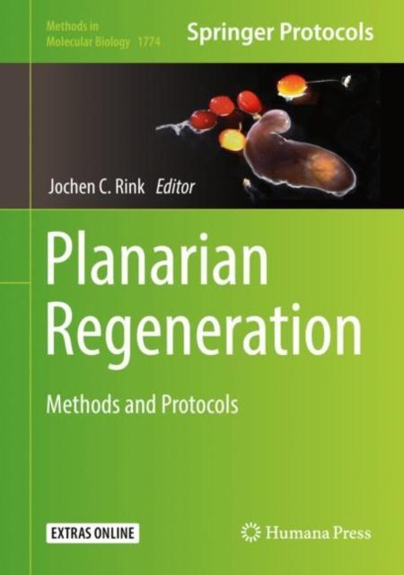 Planarian Regeneration
