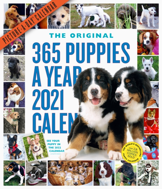 2021 365 Puppies-A-Year Picture-A-Day Wall Calendar