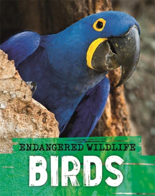 Endangered Wildlife: Rescuing Birds