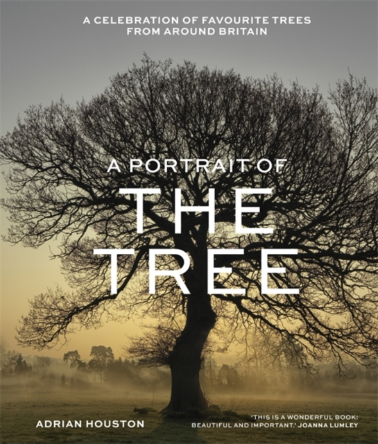 A Portrait of the Tree