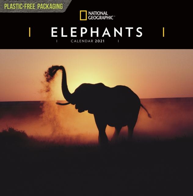 Elephants National Geographic Square Wall Calendar 2021