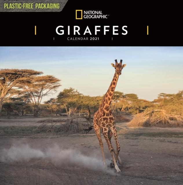 Giraffes National Geographic Square Wall Calendar 2021