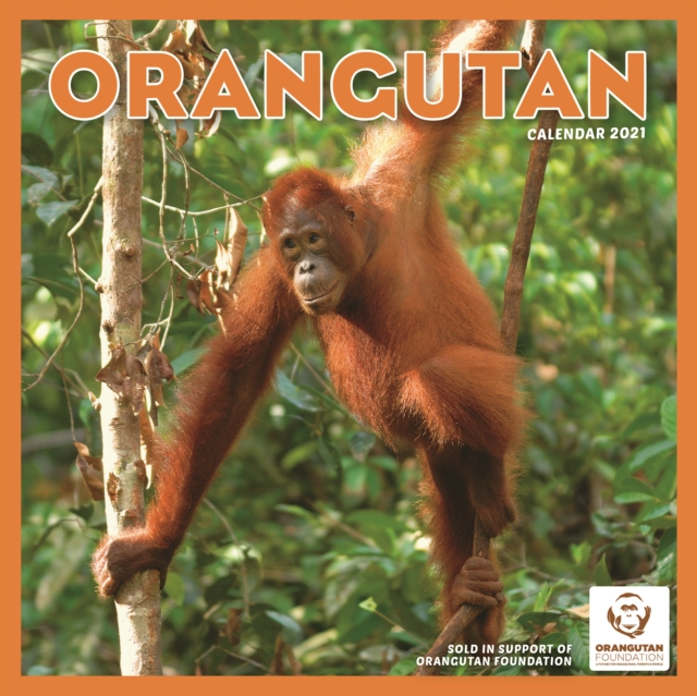 Orangutan Square Wall Calendar 2021