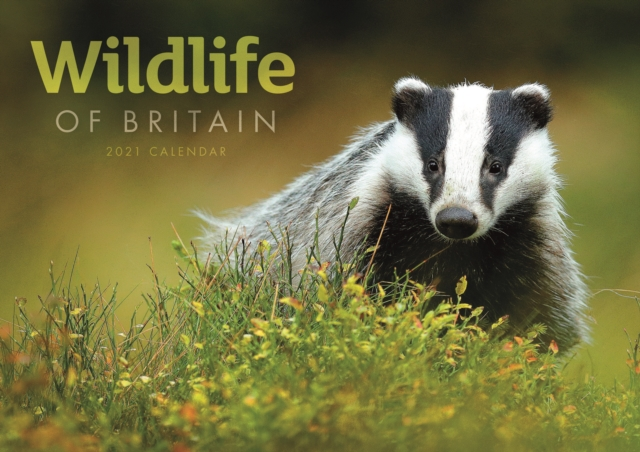 Wildlife of Britain A4 Calendar 2021