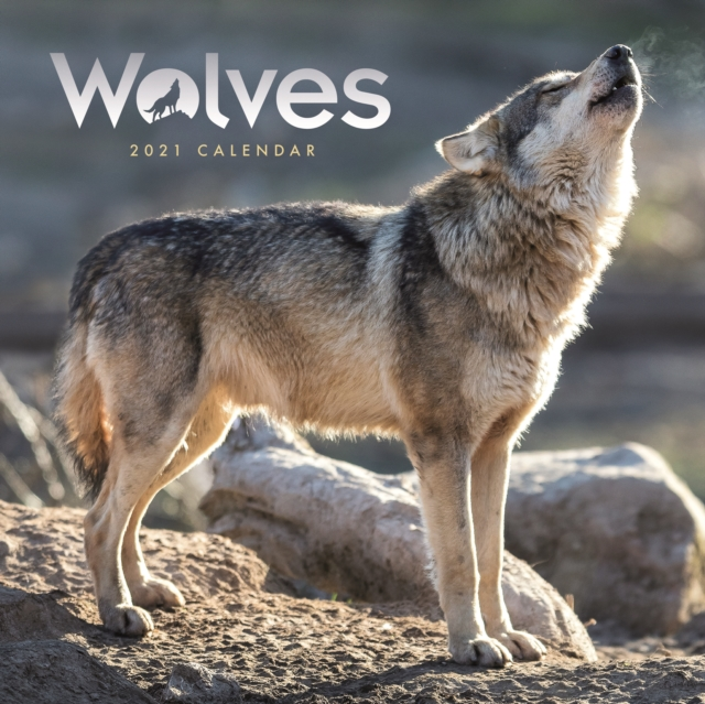 Wolves Square Wall Calendar 2021