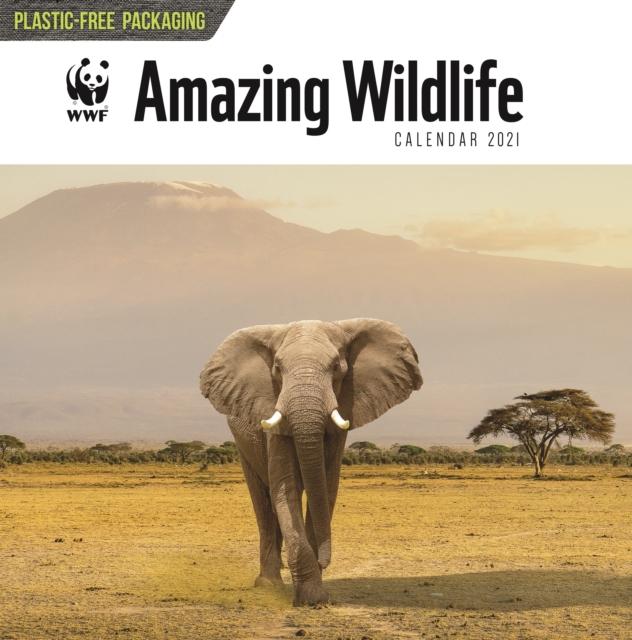 WWF Amazing Wildlife Square Wall Calendar 2021