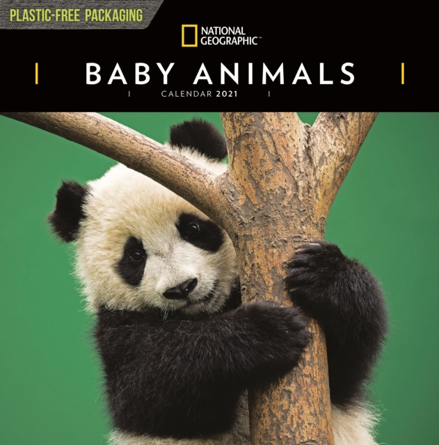 Baby Animals National Geographic Square Wall Calendar 2021
