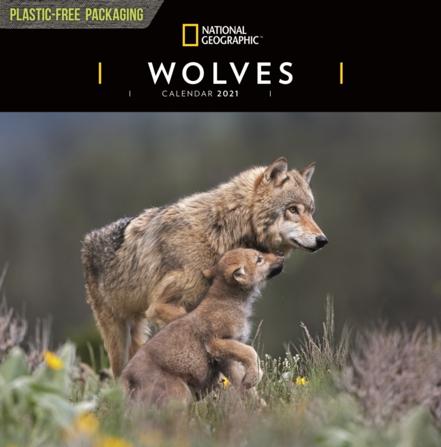 Wolves National Geographic Square Wall Calendar 2021