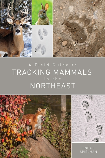Field Guide to Tracking Mammals in the Northeast