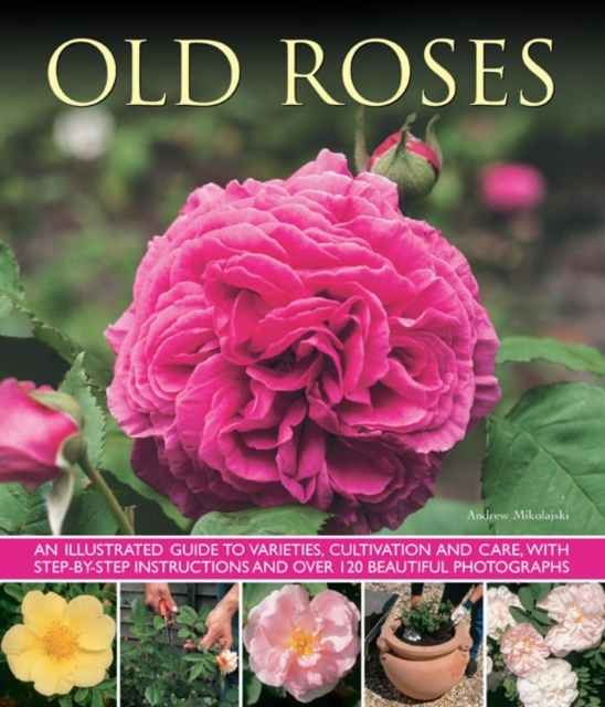 Old Fashioned Roses