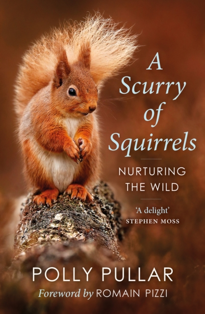 Scurry of Squirrels