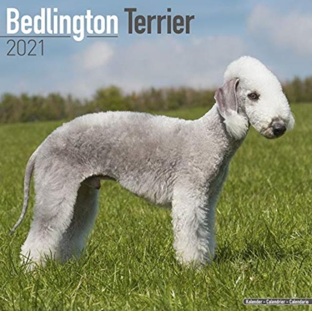 Bedlington Terrier 2021 Wall Calendar