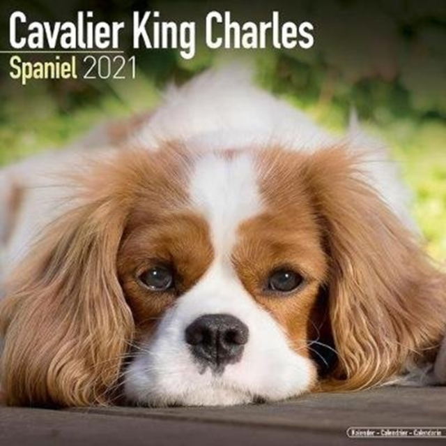 Cavalier King Charles Spaniel 2021 Wall Calendar