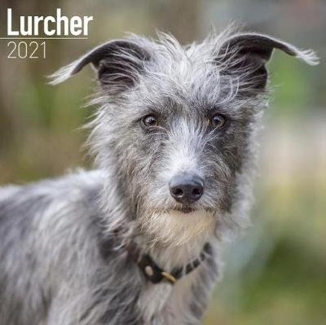 Lurcher 2021 Wall Calendar