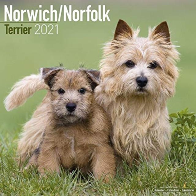 Norwich Norfolk Terrier 2021 Wall Calendar