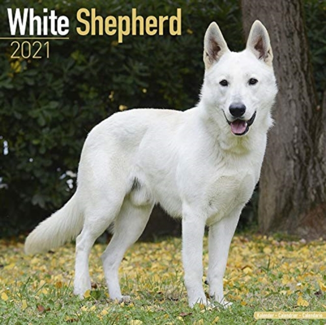 White Shepherd 2021 Wall Calendar