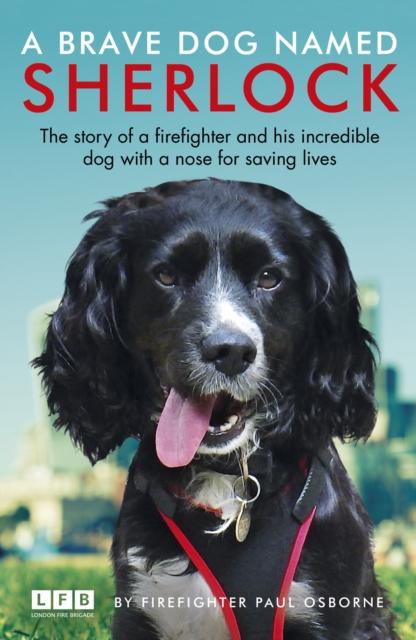 Brave Dog Named Sherlock
