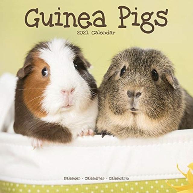 Guinea Pigs 2021 Wall Calendar