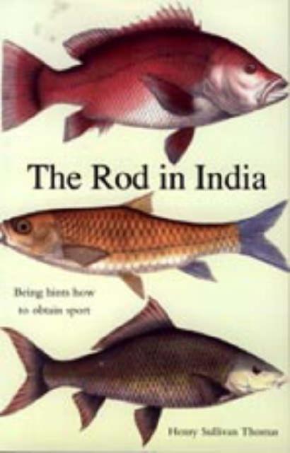 Rod in India
