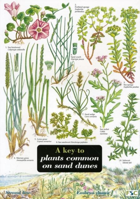 Key to Plants Common on Sand Dunes