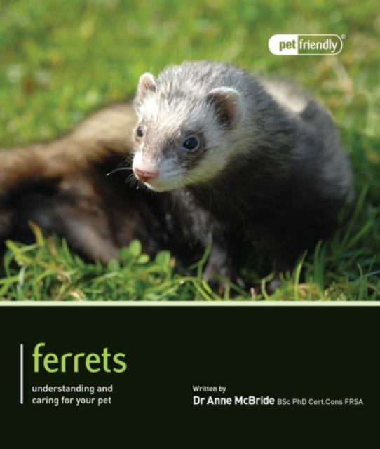 Ferrets - Pet Friendly