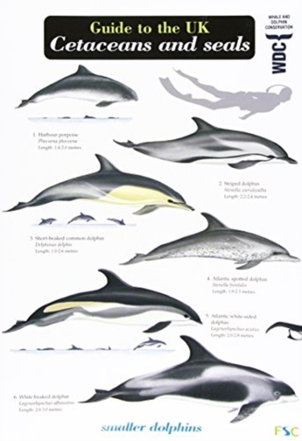 Guide to the UK Cetaceans and Seals