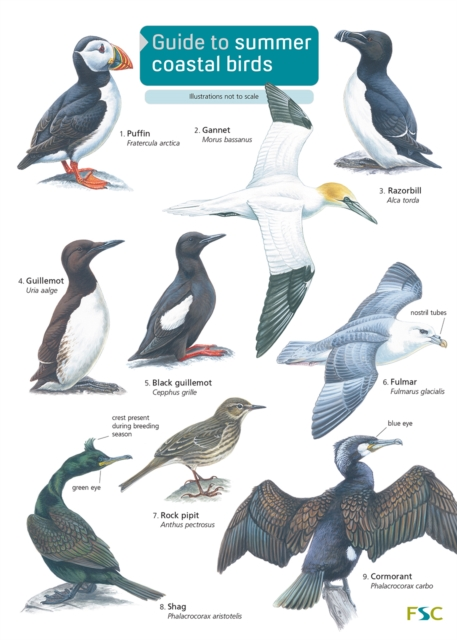 Guide to Summer Coastal Birds
