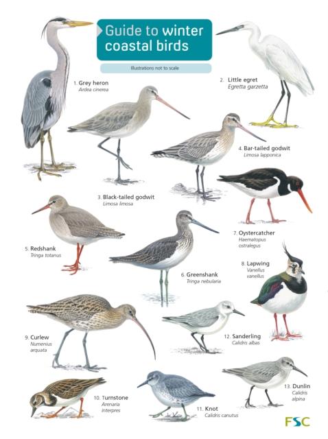 Guide to winter coastal birds