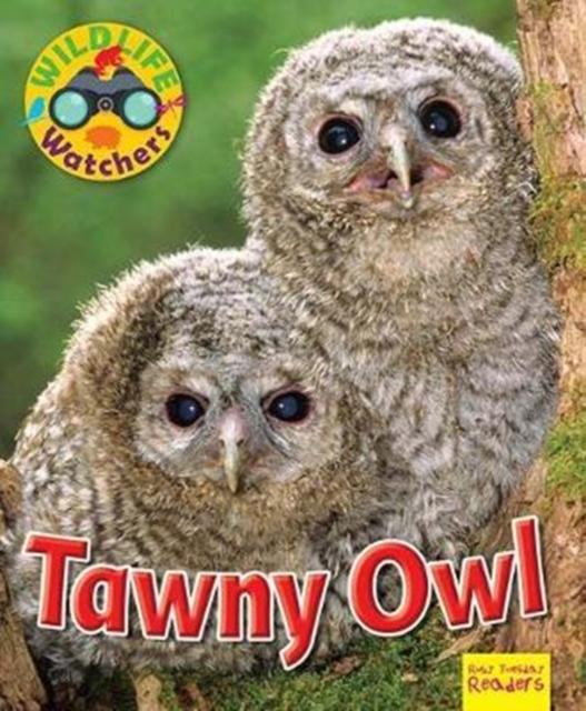Wildlife Watchers: Tawny Owl