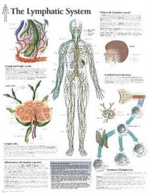 Lymphatic System Paper Poster