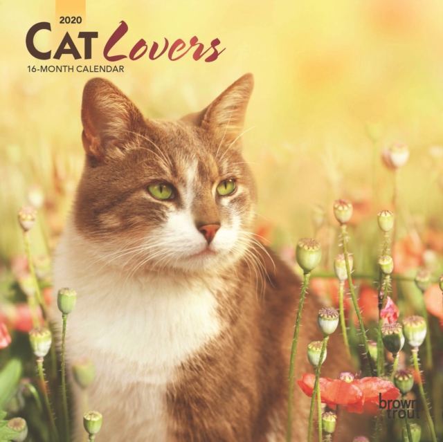 Cat Lovers 2020 Mini Wall Calendar