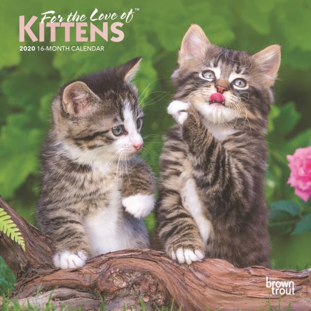Kittens, for the Love of 2020 Mini Wall Calendar