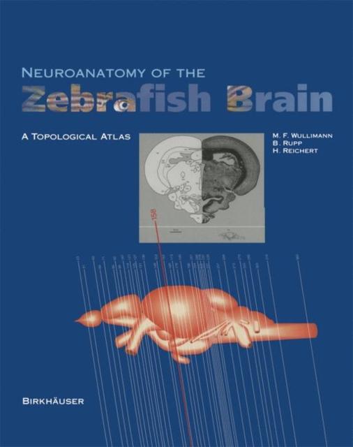 Neuroanatomy of the Zebrafish Brain
