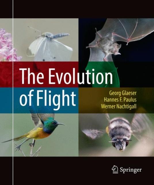Evolution of Flight