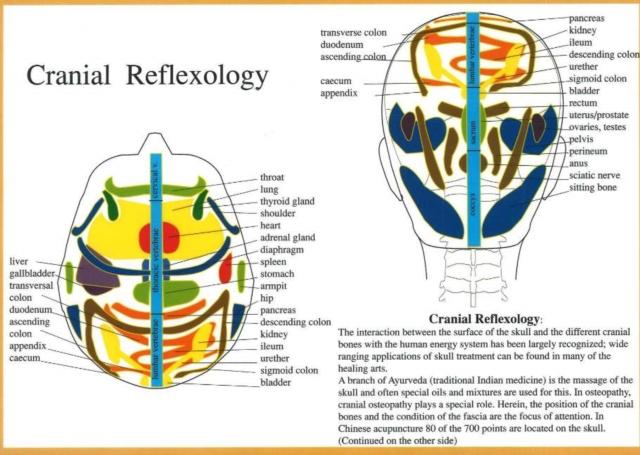 Cranial Reflexology -- A4